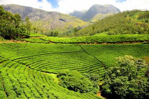 8N/9D Kerala Tour Package from Kochi