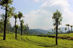 Honeymoon Special - Explore Kerala