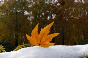 kashmir Autumn special